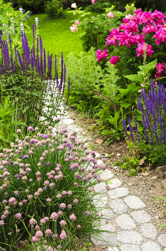 Path in blooming garden_small